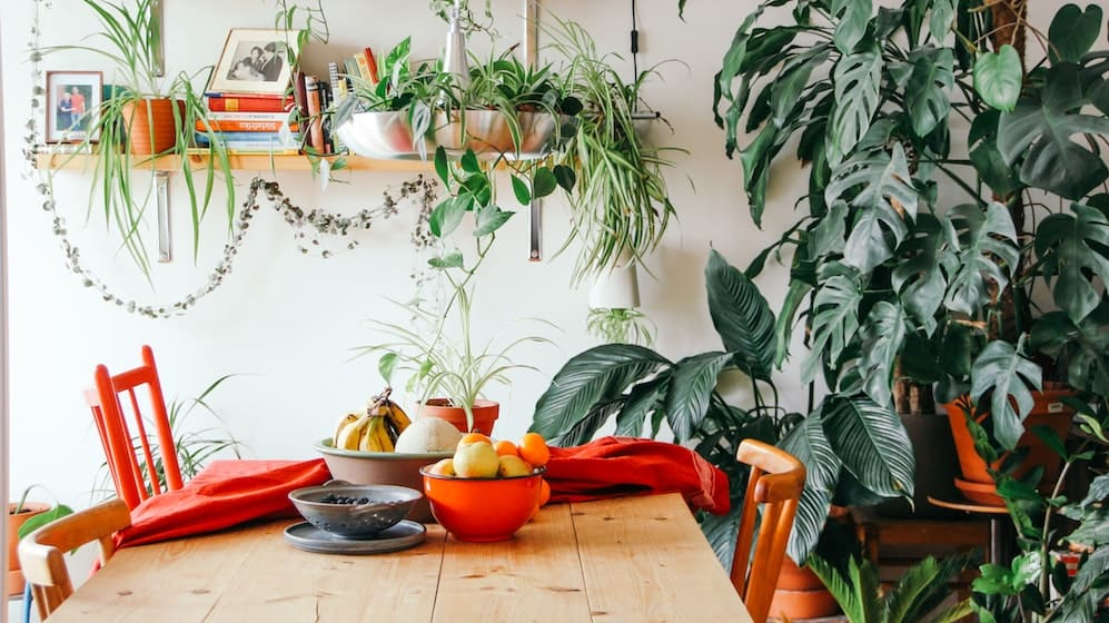 Huishouden met veel planten en houten tafel met rode stoelen